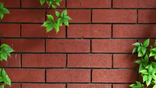 The wall background and Leaves