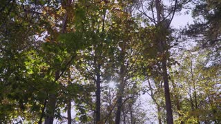 Beautiful nature in september forest. Amazing view on trees with green and yellow leaves