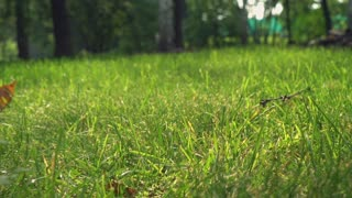 Green beautiful grass in the garden or forester. Nature in summer season at the countryside
