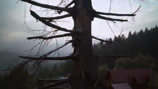 soft panorama on dead tree. Dark sky with cloudy. Top of forest with pine trees and roofs of houses