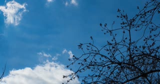 Timelapse spring sky with floating clouds, flanked by large trees, which bloom soon leaves