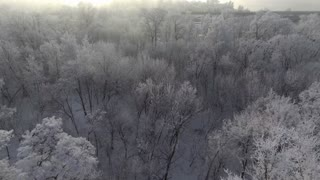 Trees in the snow, span a top view of the sun shines, aeria 4k video