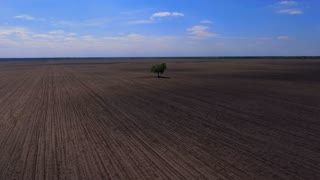 A lonely tree grows in the field. View from above
