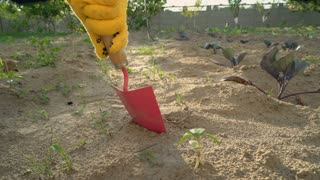 Close up details unrecognizable person planting plant in ground outdoors. Female hands in yellow working gloves digging a hole with a pink shovel. Gardener using garden tools in summer season