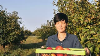 Gardener posing in the orchard. Happy candid caucasian woman standing in the garden with fruit trees holding box with red apples. Smiling fruiter or worker looking at the camera