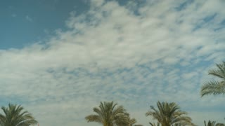 Palm Tree Sky Cloud Time Lapse High quality 10bit footage. Very easy color correction