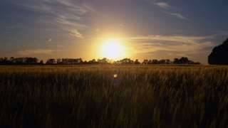 Woman walking around field with young wheat at sunset. Female going in the rays of the setting sun. Lady clothes are flying in the wind. the evening sky with breathtaking sundown