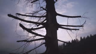 view on the nature in evening time. horror landscape . soft panorama on dead tree. Dark sky with cloudy
