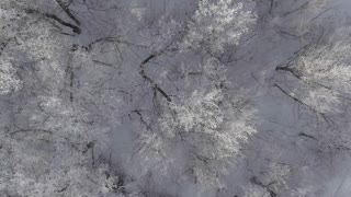 Winter forest, flying over the trees studded with frost Aeria 4k video