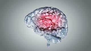 Glassy brain. 3D animation