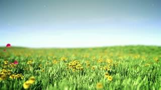 Hearts flies over summer grass field