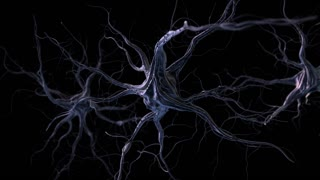 Nerves. 3D animation