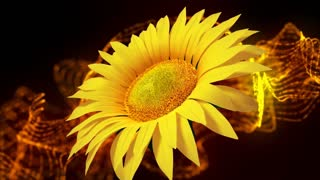 SunFlower. Abstract motion background