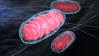 Mitochondria. Mitochondrion is a double membrane-bound organelle found in all eukaryotic organisms