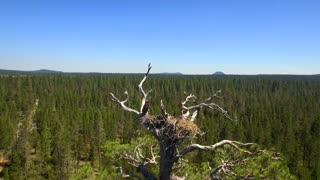 Aerial view of bird in nest above green forest under blue sky