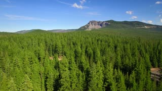 Aerial view of green Oregon forest and mountainside under blue sky 2