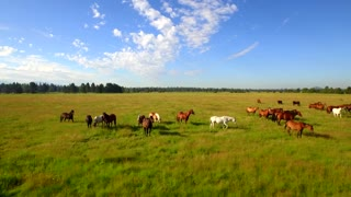 Aerial view of horses grazing in open field under blue sky
