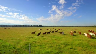 Aerial view of horses running in open green field with beautiful blue sky 2