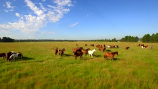 Aerial view of horses running in open green field with beautiful blue sky 3