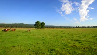 Aerial view of horses running in open green field with beautiful blue sky 4