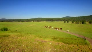 Aerial view of horses running in open green field with beautiful blue sky 6