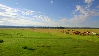 Aerial view of horses running in open green field with beautiful blue sky