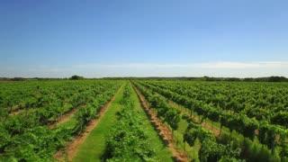 Aerial view of San Antonio tree farm under blue sky 2