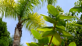 Blue sky peaks through palm tree leaves blowing in wind 2
