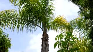Blue sky peaks through palm tree leaves blowing in wind