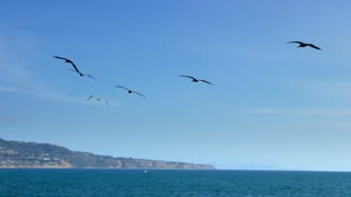 Closeup of birds flying above oceanside mountain 4