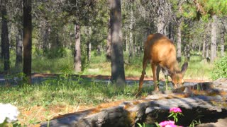 Deer in a green forest next to flowers 2