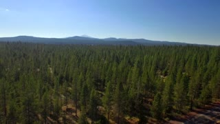 Drone shot above Oregon forest by mountains and blue sky