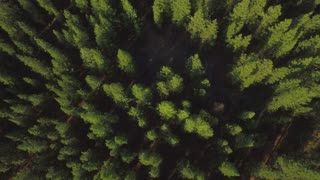 Drone shot of green tree tops in Oregon forest 2
