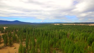 Drone shot of Oregon forest with mountains and blue sky