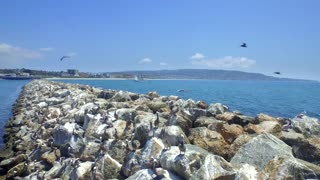 Drone view of pelicans on rocks by ocean and blue sky 3