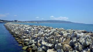 Drone view of pelicans on rocks by ocean and blue sky 4