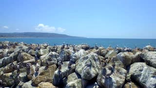 Drone view of pelicans on rocks by ocean and blue sky