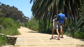 Family walks on boardwalk by palm tree on sunny day 2