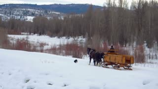 Horse and carriage follow dog through snow and mountains