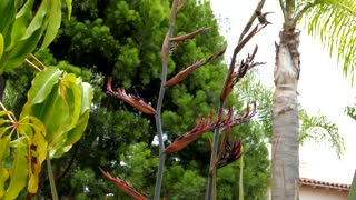 Hummingbird feeding by palm trees under blue sky 4