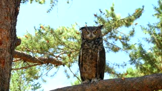 Owl perched on tree branch in daytime 2