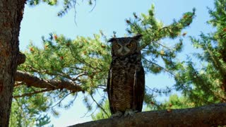 Owl perched on tree branch in daytime