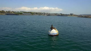 Sea lion rests on buoy in the ocean 2