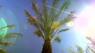 Sunny blue sky over palm trees with sunbeams 2