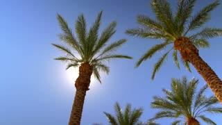 Sunny blue sky over palm trees with sunbeams 5