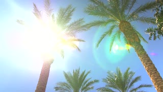 Sunny blue sky over palm trees with sunbeams 6