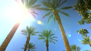 Sunny blue sky over palm trees with sunbeams 7