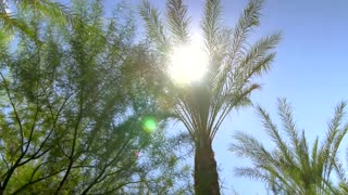 Sunny blue sky over palm trees with sunbeams
