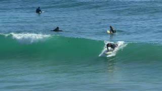 Surfer catches and rides wave while other surfers watch 3