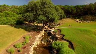 Turkeys walk around stream by pathways through woods